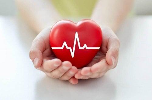 et rødt hjerte i hænderne