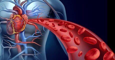 Man kan forbedre blodomløbet med gurkemeje