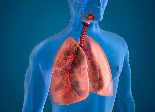 Man kan optimere sine lunger med disse fødevarer