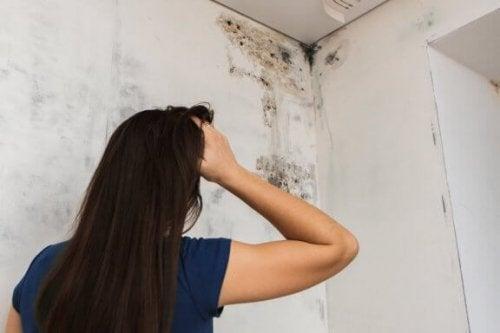 Slip af med skimmelsvamp på badeværelset