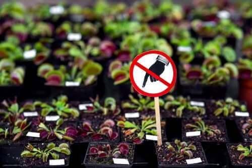 Farlige planter: Syv, du ikke bør have hjemme