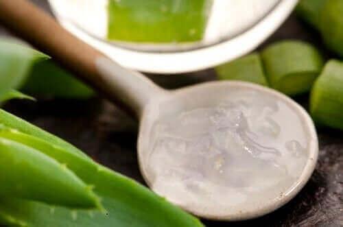 Aloe vera er et eksempel på naturlige midler mod hårtab