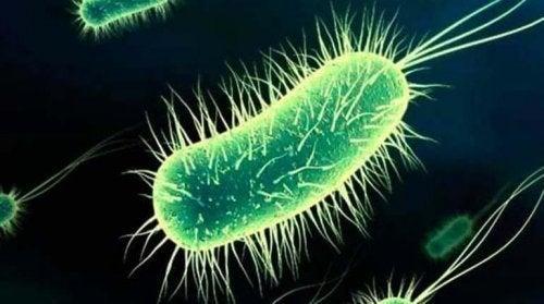 Spredningen af bakterier forårsager blærebetændelse efter samleje