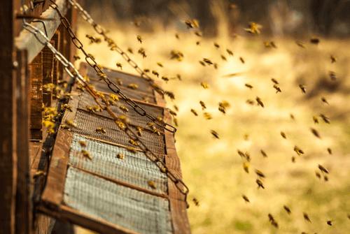 Bier producerer mange produkter, der er nyttige for mennesker