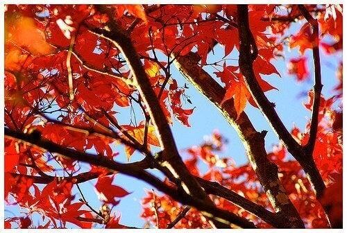 Flotte efterårsblade på et træ