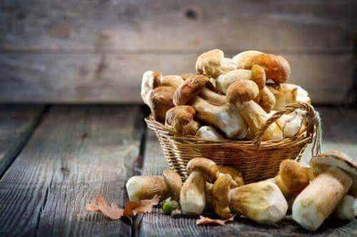 De fem bedste medicinske svampe ifølge videnskaben