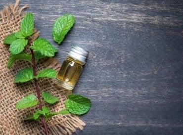 Fordelene ved æterisk mynteolie for din krop