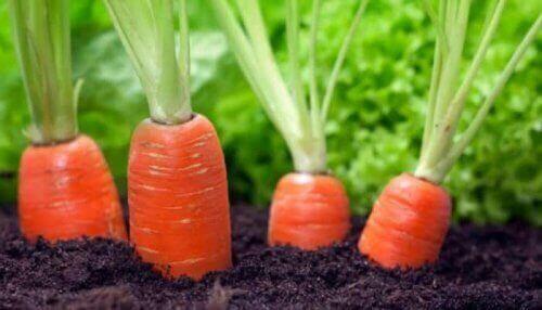 Gulerødder har et højt indhold af antioxidanter, såsom vitamin A, der hjælper med at bevare kroppens sundhed
