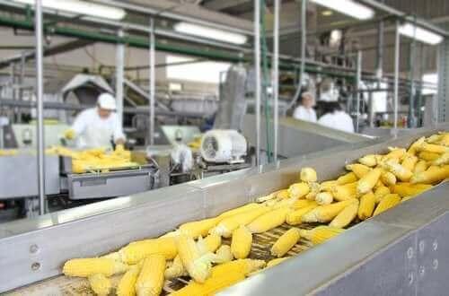 Effekten af konservering af fødevarer i forhold til næringsmæssig værdi