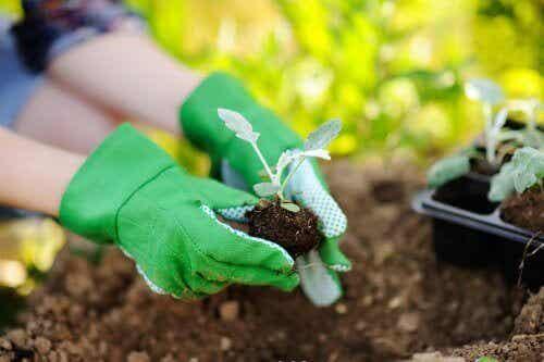 Ting, man skal huske på ved omplantning af planter