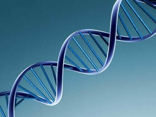En illustration af et DNA