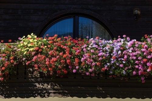 Fem duftende blomster til en lille have