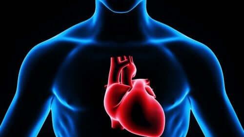 Illustration af hjerte som er stedet, hvor man giver en intrakardiel injektion