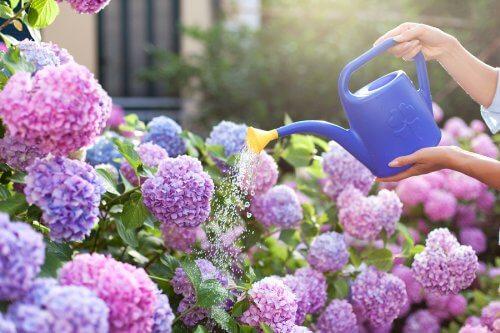 En af de bedste ting i livet er at gå ud og nyde lugten af en have fuld af duftende blomster. Faktisk er haver ikke kun behagelige for vores øjne, men også for resten af vores sanser; lugtesansen, for eksempel