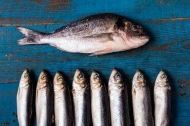 De mange fordele ved fed fisk