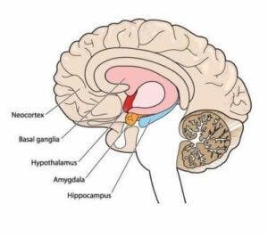 Bevægelsesforstyrrelser: Alt om atetose