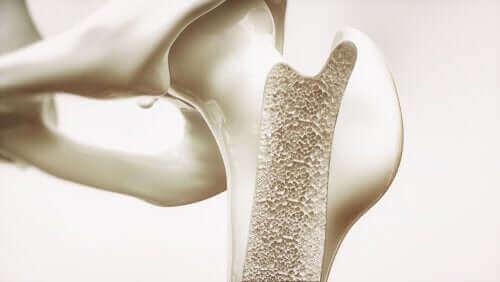 Illustration af knogler, som kan blivere sundere takket være havregryn og dets fordele
