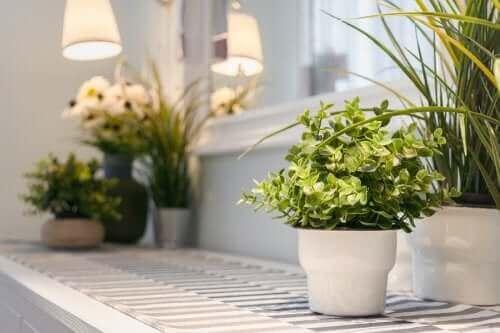 Planter er en fantastisk måde at få dit hjem til at føles hyggeligt og behageligt
