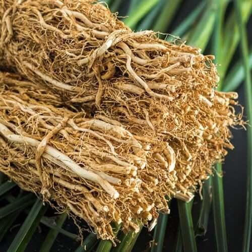 Tørrede vetiver kan bruges i behandlingen af trigeminusneuralgi