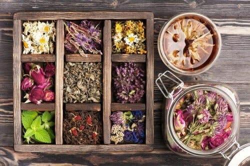 Forskellige blomster illustrerer naturmedicin