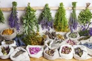 Hvad er fordelene ved naturmedicin?