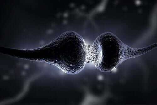 To neuroner