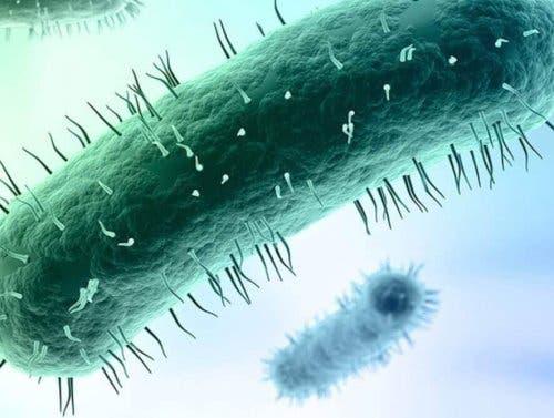 Mycoplasma genitalium forårsager en seksuelt overført infektion