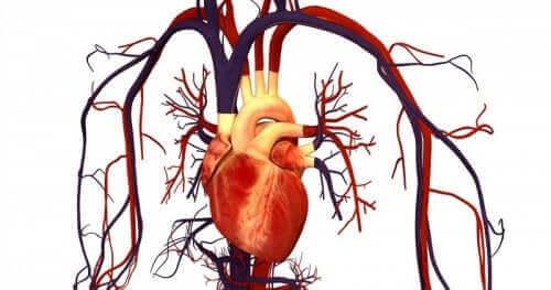 Målet med Atorvastatin er at forhindre hjertekarsygdom, hvilket illustreres af hjerte