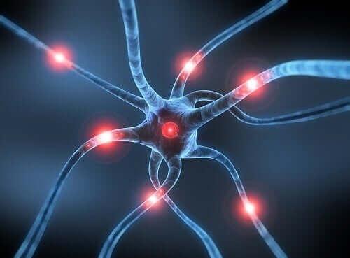 Illustration af neuroner