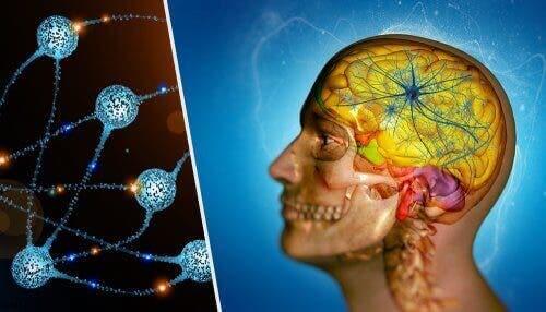Hoved med neuroner
