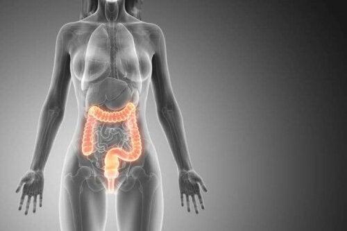 Fordøjelsessystem i kvindes krop