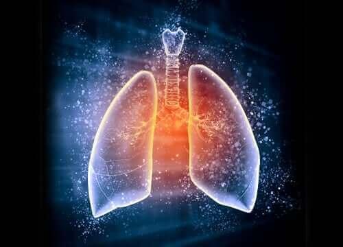 Illustration af lunger