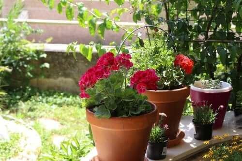 Sommerblomster: Seks muligheder til din have