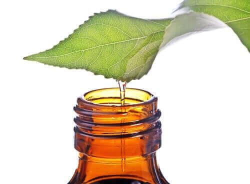 Te træ olie