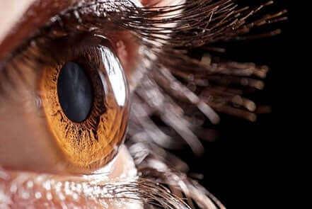 Nærbillede af øje