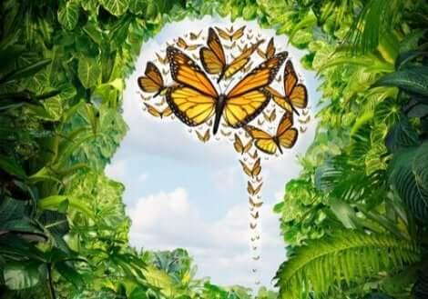 Sommerfugle i hjerne symboliserer logoterapi