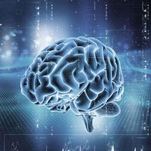 En hjerne er oplyst i blå farver