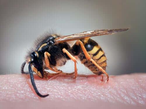 Hjemmemidler til hvepsestik