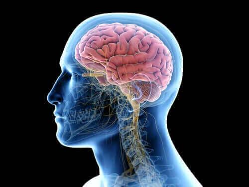 Illustration af hjernebetændelse