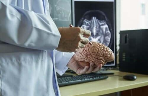 Læge med model af hjernen forklarer om hjernehinderne