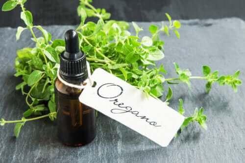 Opskrift på hjemmelavet oreganoolie og dets fordele