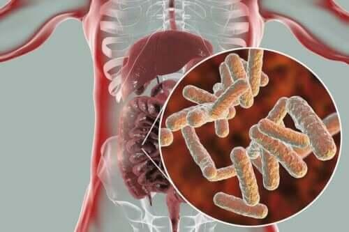Bakterier i tarme