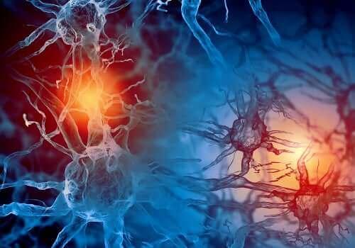 Neuroner i hjerne