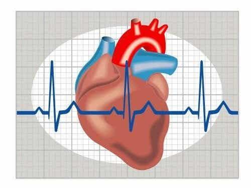 Kunstige hjerter kan hjælpe patienter uden donorer