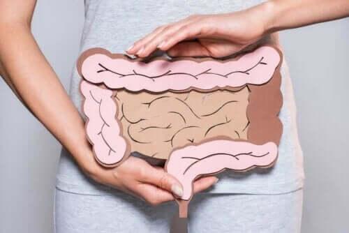 Illustration af en kvindes tarme, som er afhængige af fordøjelsesenzymer
