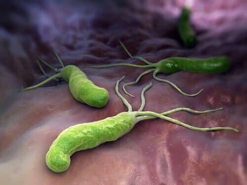 Illustration af bakterier, som bekæmpes af immunforsvaret