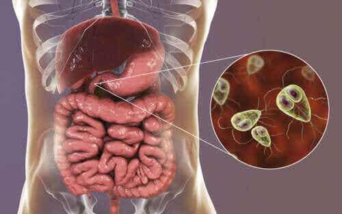 Symptomer og behandling af giardiasis