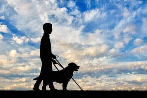 Alt, hvad du bør vide om synshandicap