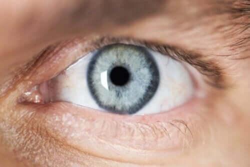 Lyset afgør pupillernes størrelse