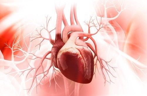 7 tips til et sundt hjerte